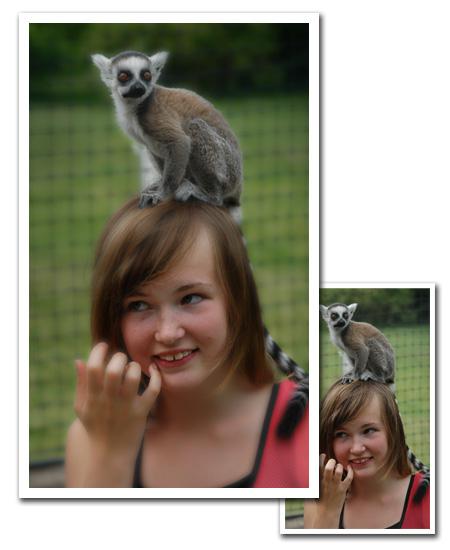 Lemur med drömljus