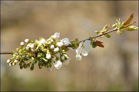 080424 blommor1