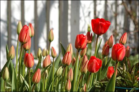 080424 blommor2