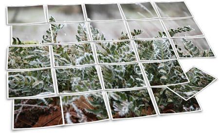 Frostiga blad
