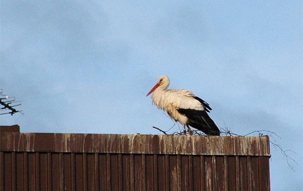 130427-storken1blogg