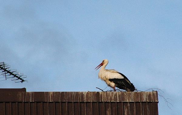 130427-storken3blogg