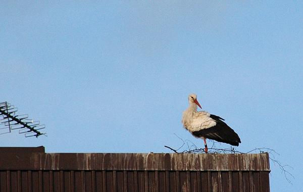 130427-storken4blogg