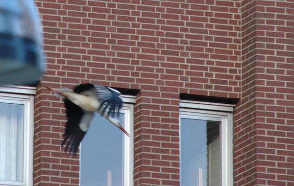 130427-storken5blogg