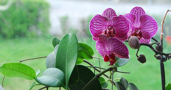 130509-orkideer-mini