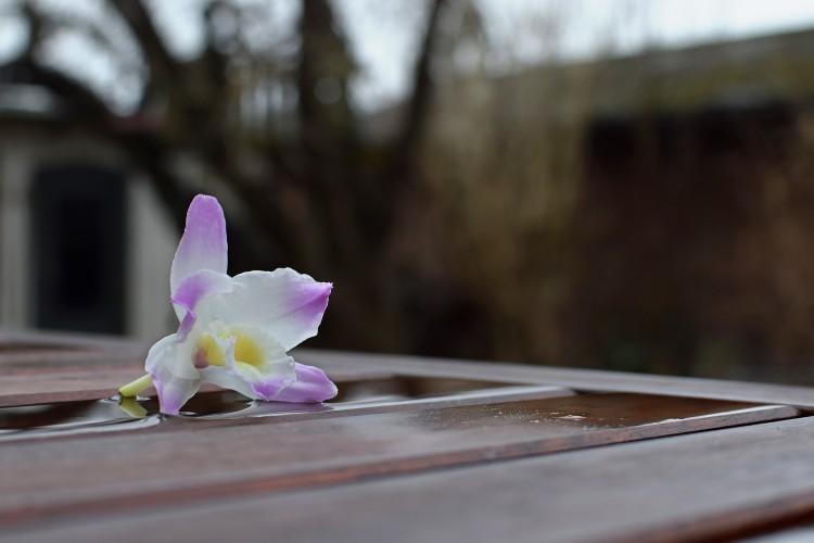 160101_orkide